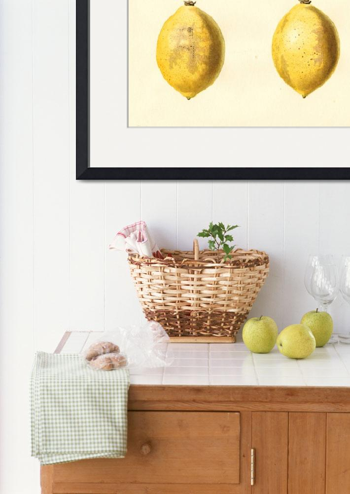 """""""Vintage Lemon Watercolor Painting&quot  by Alleycatshirts"""
