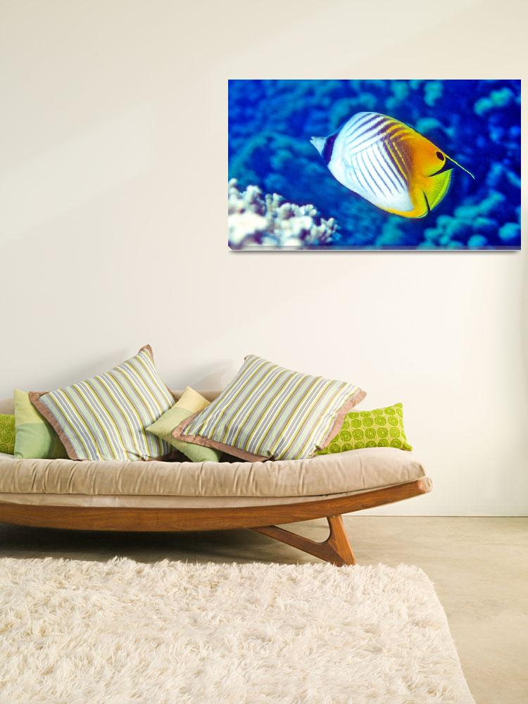 """""""Threadfin Butterflyfish&quot  (1991) by JoaoPonces"""