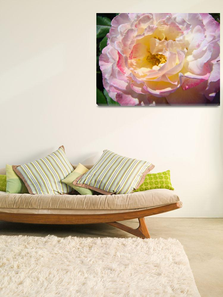"""Beautiful Big Pink Yellow Rose Floral art prints""  (2010) by BasleeTroutman"