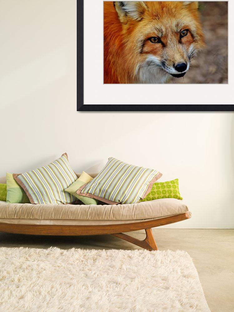 """""""Red Fox Wildlife Art Print&quot  (2016) by rogueart"""