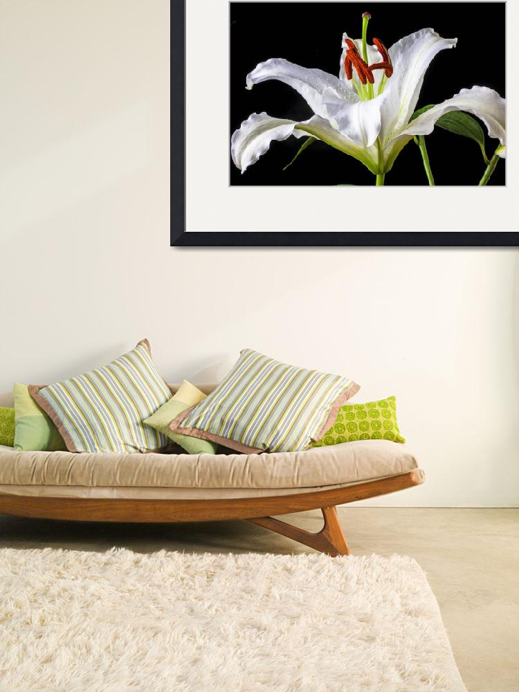 """White tiger lily still life""  (2013) by photogarry"