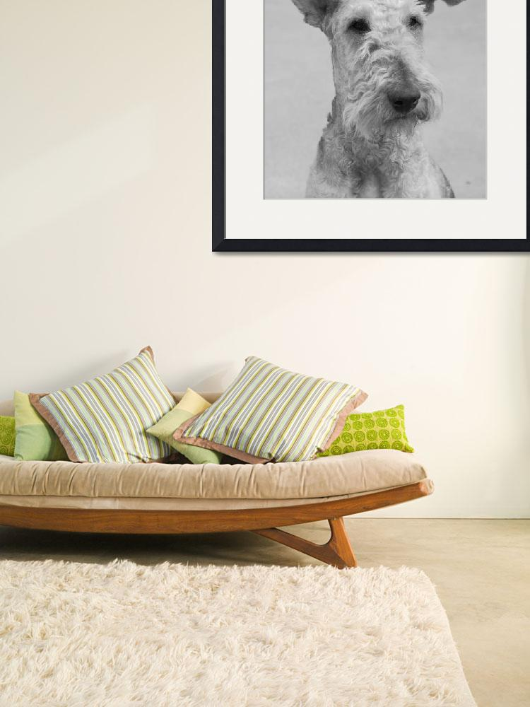 """""""Airedale&quot  by maryostudio"""