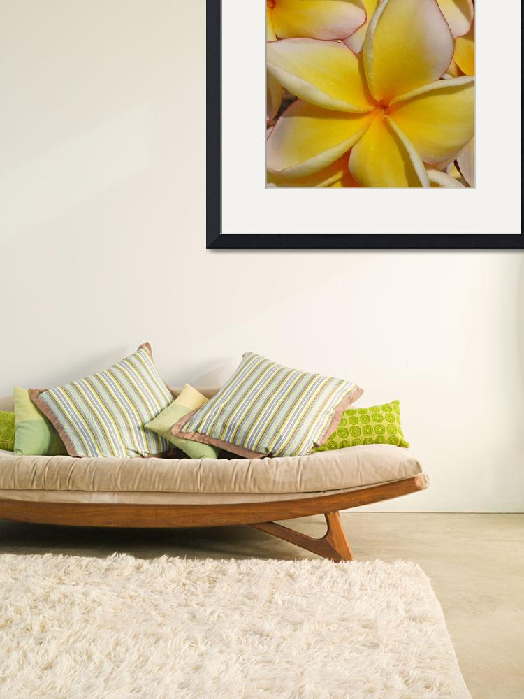 """Hawaiian Frangipani&quot  (2012) by joeyartist"