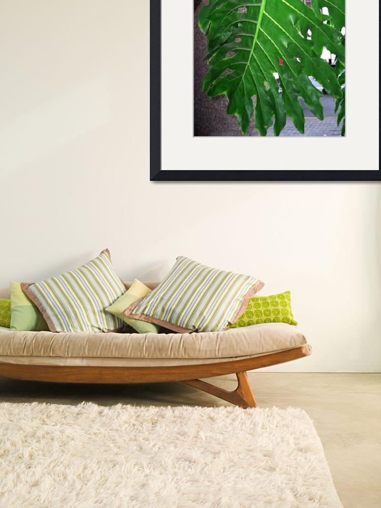 """""""Philodendron Leaf from below""""  by ChristopherInMexico"""