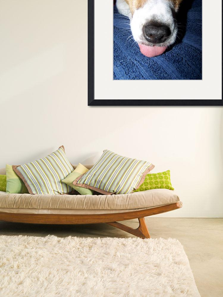 """""""Jack Russell Terrier&quot  (2009) by iona847"""