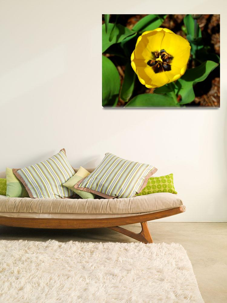 """""""Yellow Tulip #1&quot  (2008) by budo"""