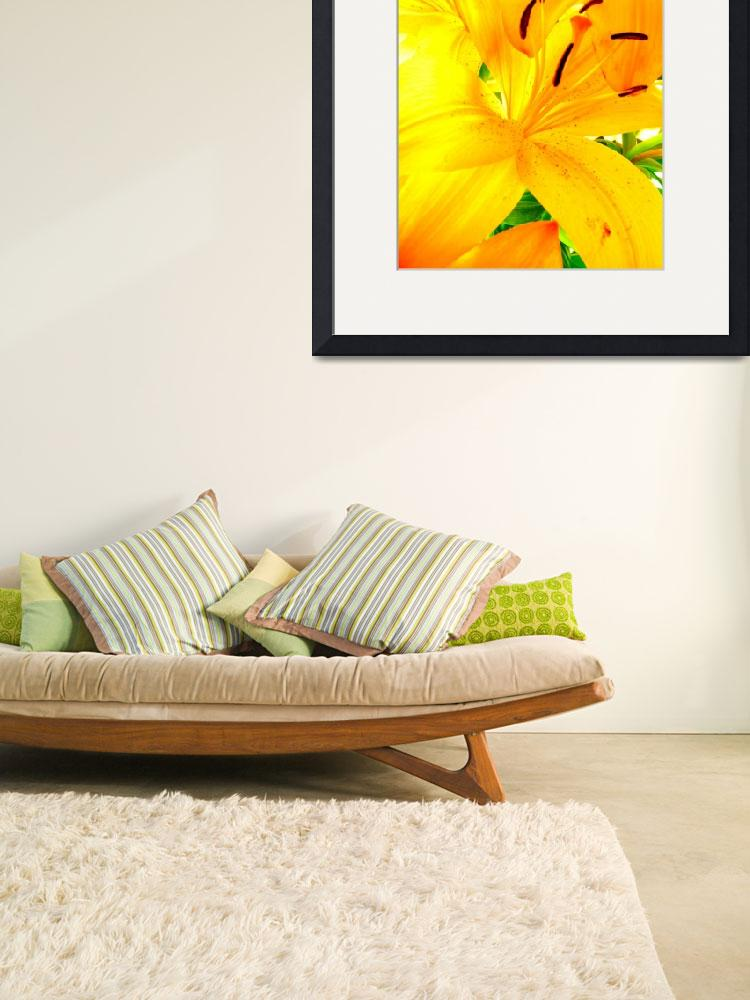 """""""Day Lily 1, CO.""""  by sethgoldstein72"""