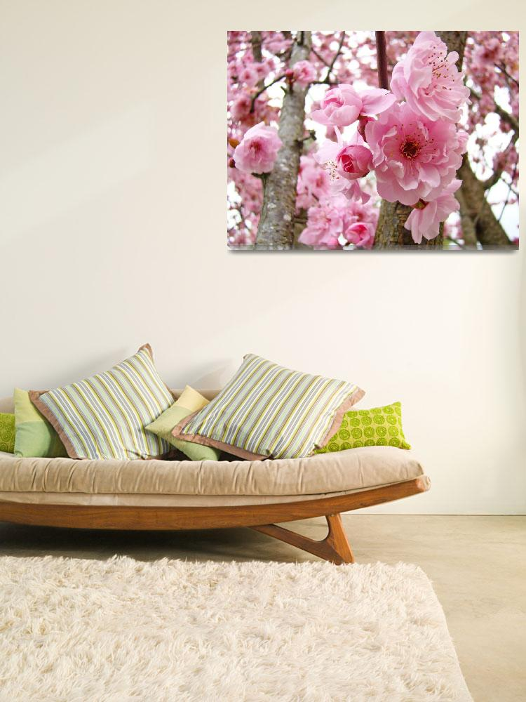"""BLOSSOMS PINK TREE Blossoms Flower Art Prints""  (2009) by BasleeTroutman"