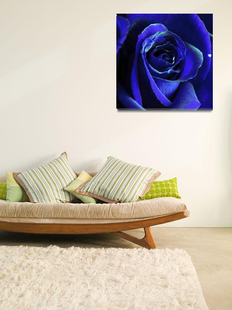 """Rose In Blue&quot  (2009) by ldfranklin"