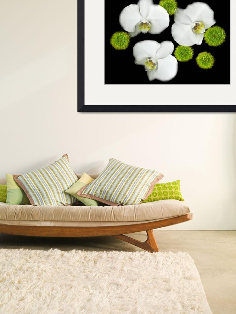 """white orchids original color photography&quot  (2015) by modernhouseart"