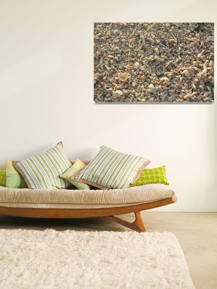 """""""Thousands of Shells""""  (2009) by anyoungs"""