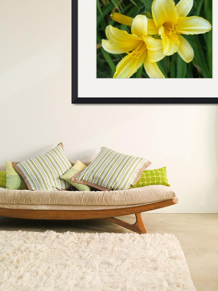 """""""Yellow Day Lilies&quot  (2008) by EdCooper"""