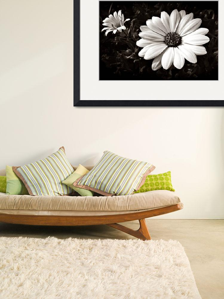 """""""Daisies&quot  (2008) by bavosiphotoart"""