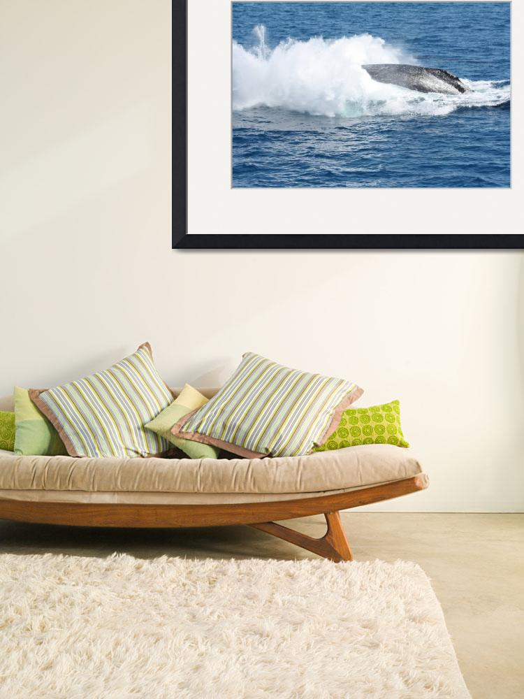"""""""NaP_ Whale Watching065&quot  by nevilleprosser"""