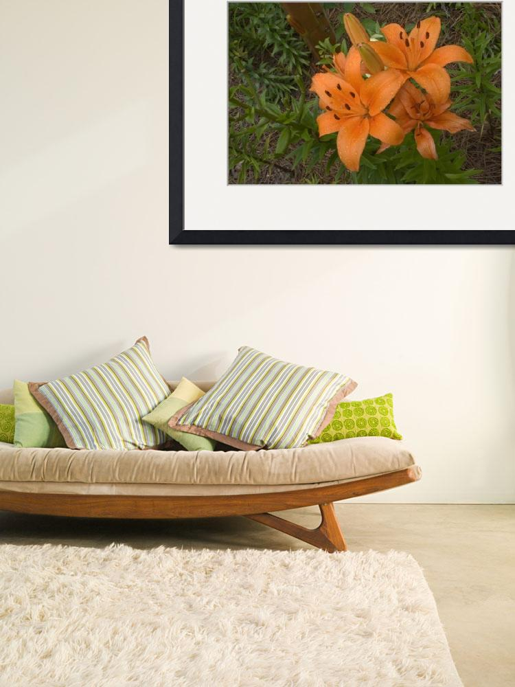 """""""orange lilies&quot  (2009) by MargaretHarding"""