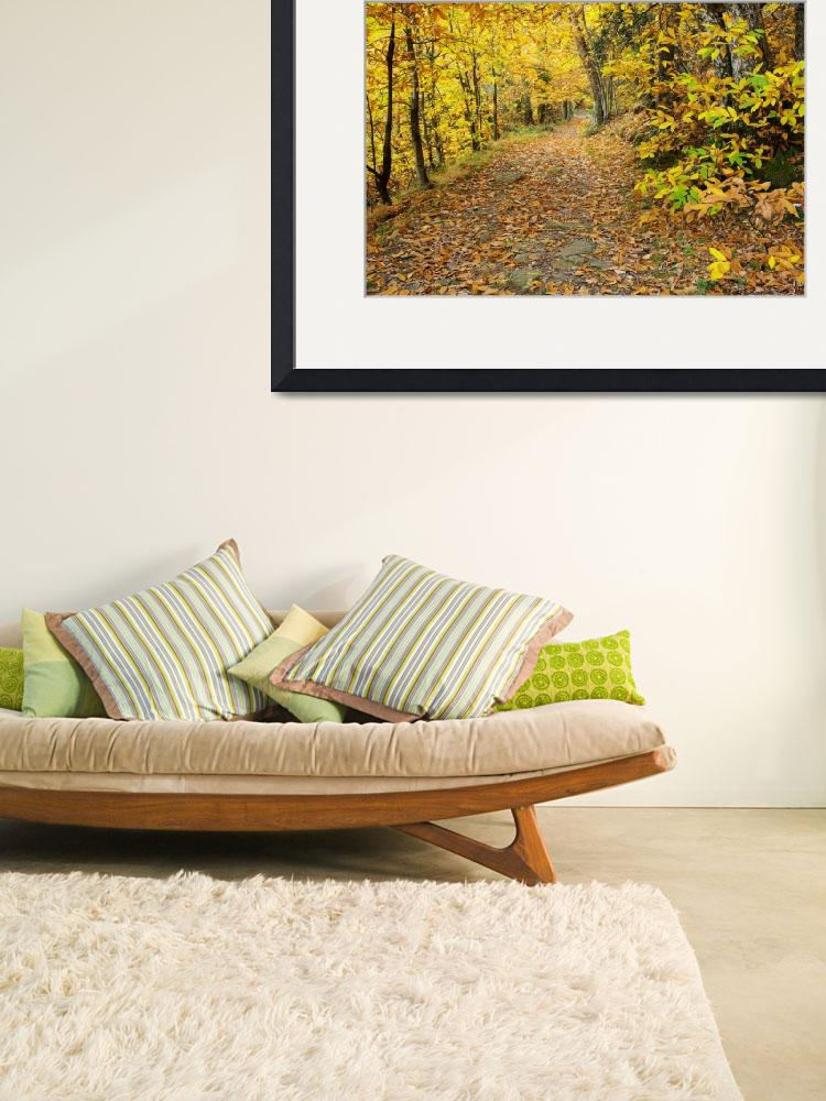 """Autumn path in Provence forest&quot  (2009) by frenchlandscapes"
