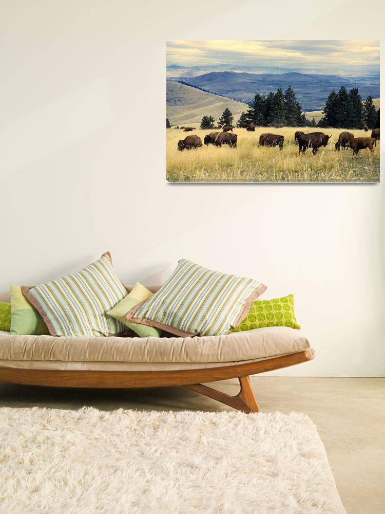 """""""National Parks Bison Herd&quot  by Alleycatshirts"""