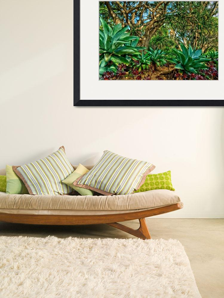 """""""Aloe Plants&quot  by craigbrewer"""