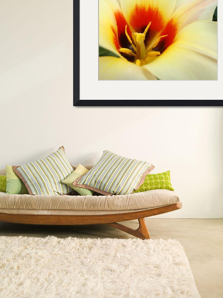 """""""Christmas gifts Tulip Flower art prints""""  (2011) by BasleeTroutman"""
