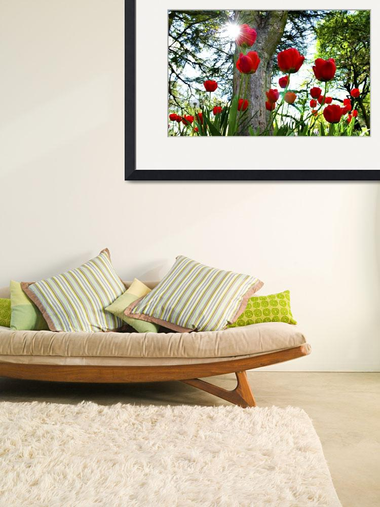 """""""Sunlight Awakens Lovely Red Tulips&quot  (2015) by AnswersFound"""
