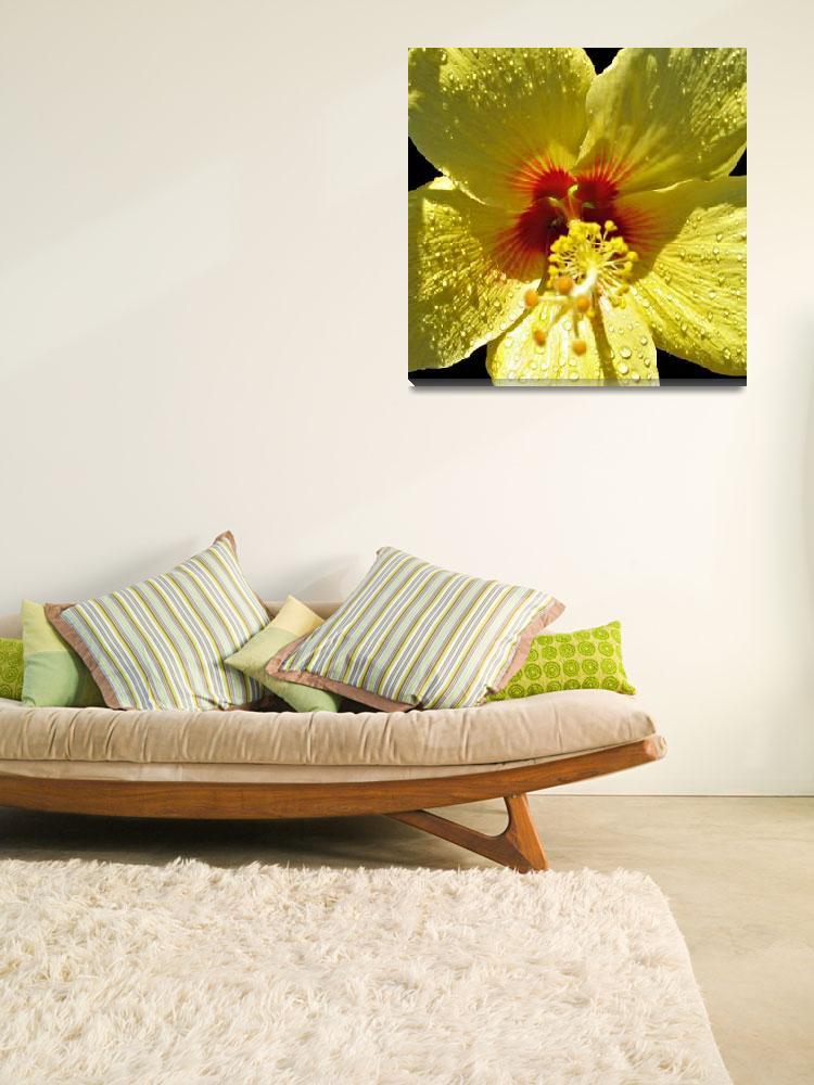 """Yellow Hibiscus&quot  (2008) by Sharriman"