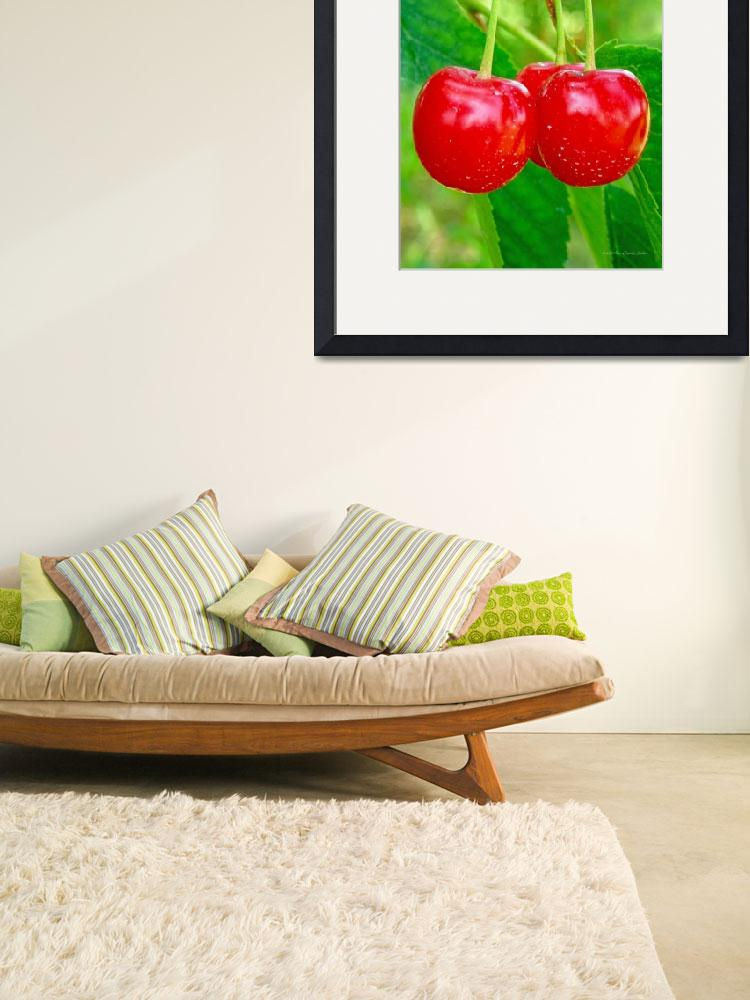 """""""Cherries""""  by HodlinGallery"""