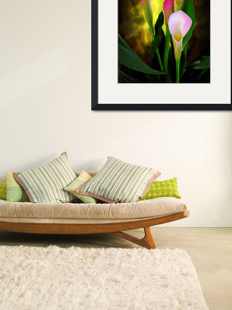 """""""Pink Cala Lilies&quot  (2007) by pixelgraphs"""