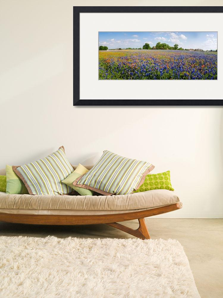 """Wild About Round Rock Wildflowers Panorama&quot  (2018) by LynnBauer"