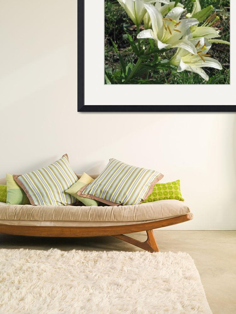 """""""White Lilies After a Rain""""  (2008) by willis-prints"""