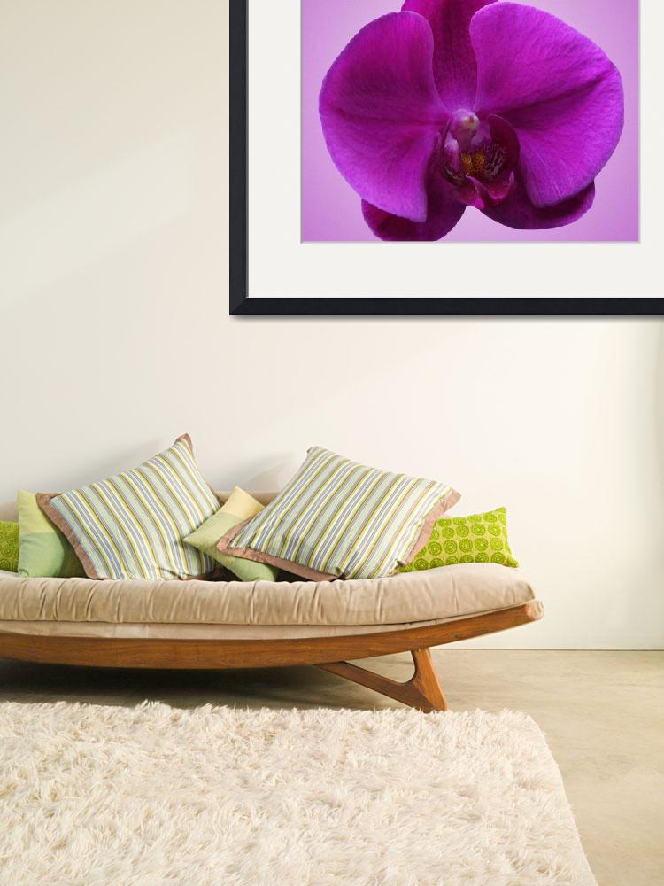 """""""Purple Orchid&quot  by LostandFound"""