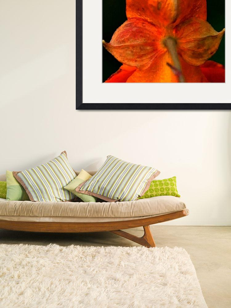 """""""Fall Color&quot  (2012) by bavosiphotoart"""