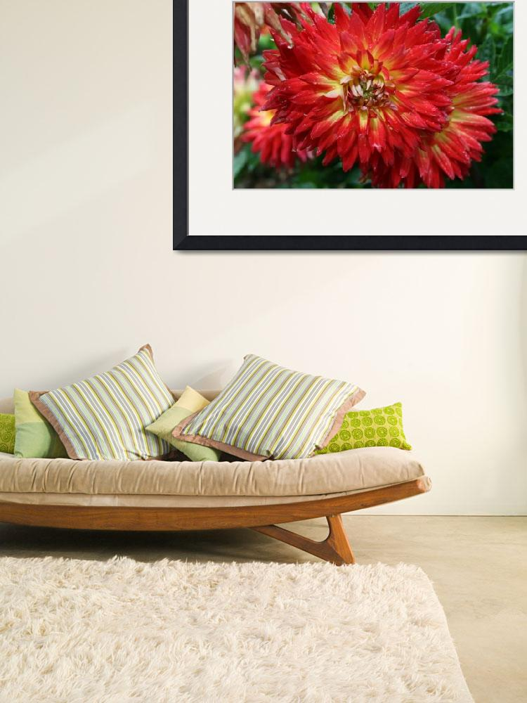 """""""Dahlia&quot  by NaturEscapesPhotography"""
