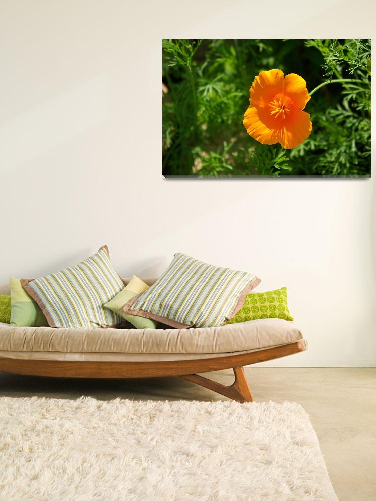 """Orange Californian Poppy&quot  (2011) by loversdream"