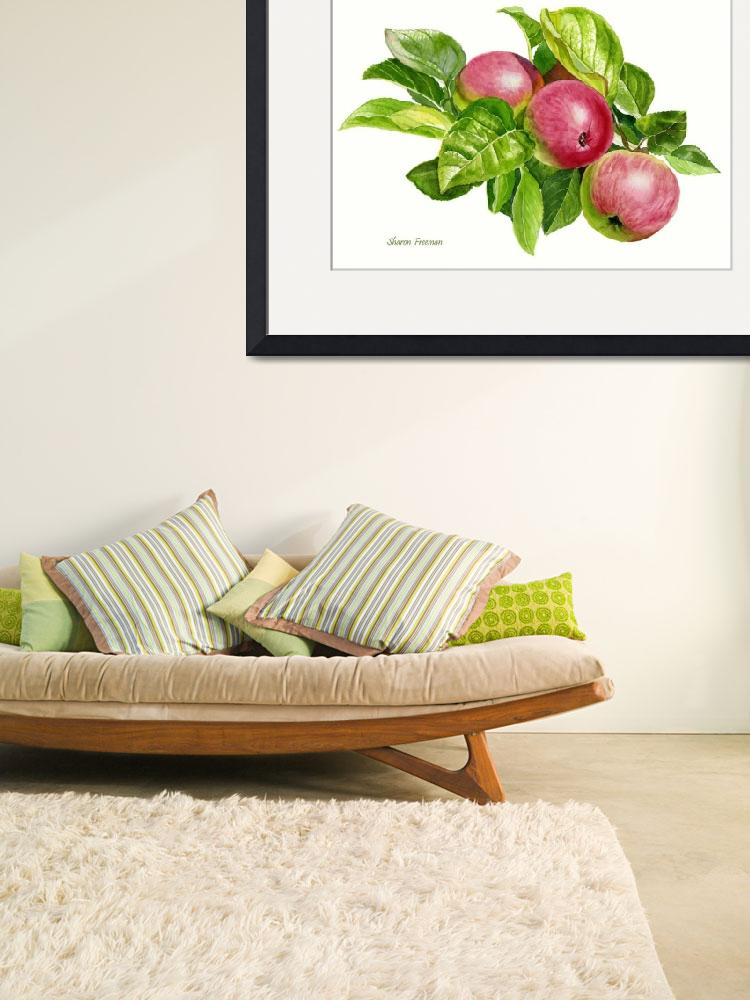 """""""Cider Apples White Background""""  (2013) by Pacific-NW-Watercolors"""