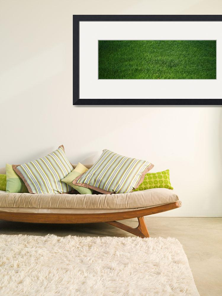 """Green grass&quot  by Panoramic_Images"