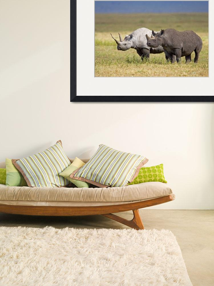 """""""Side profile of two Black rhinoceroses standing i&quot  by Panoramic_Images"""
