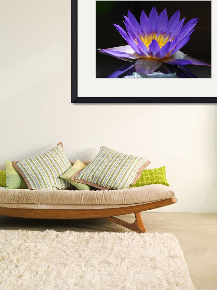 """""""water lily""""  by spriggs"""