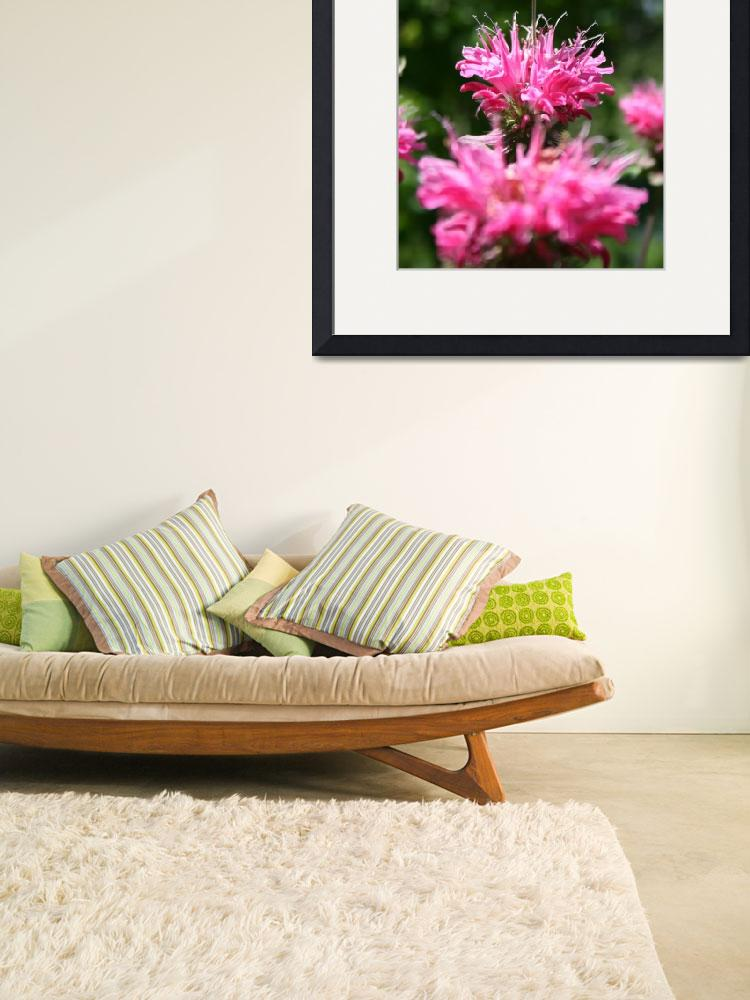 """""""Bee Balm Crown Jewel of The Garden&quot  (2009) by perceptionphotography"""