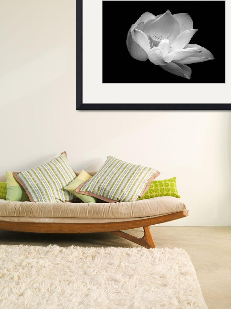 """""""Indian Sacred Lotus in black and white&quot  (2013) by LightHeart"""