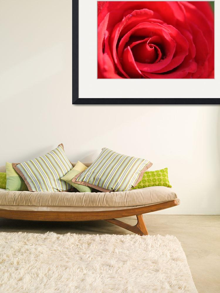 """""""RED ROSE Classic Deep Inside&quot  (2011) by ElliePhotoArt"""