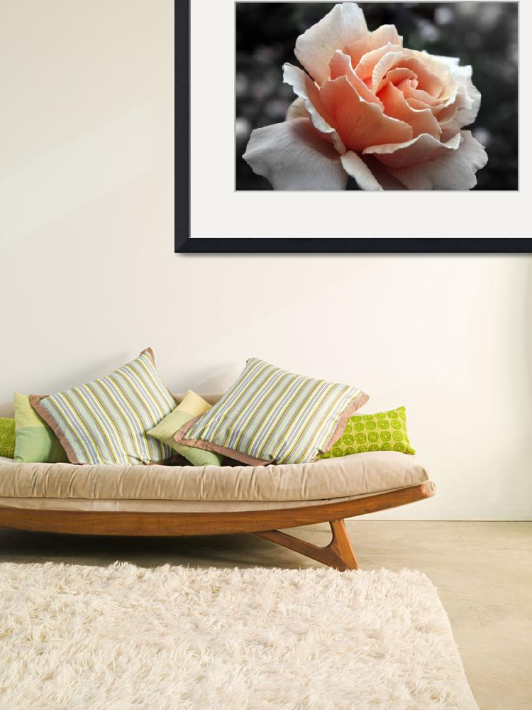 """""""Peach roses are my favorite&quot  by Lollygagging"""