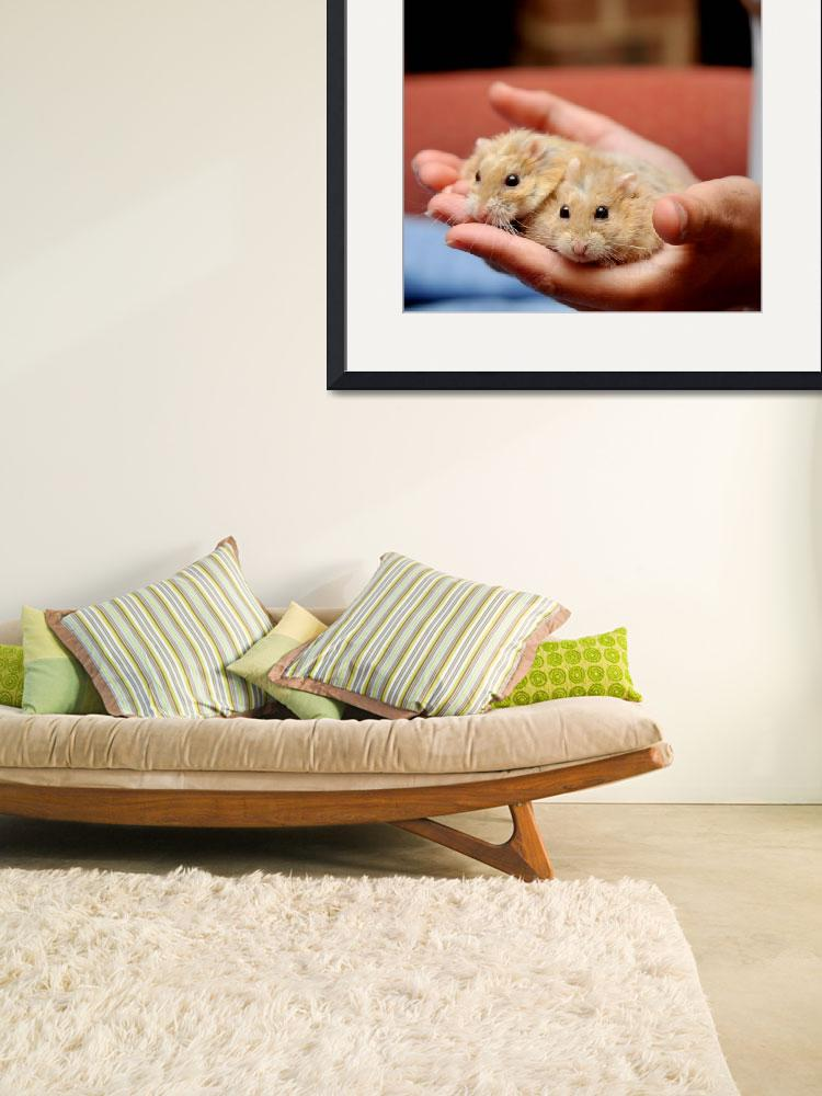 """""""Hamsters In Hand&quot  (2009) by ldfranklin"""