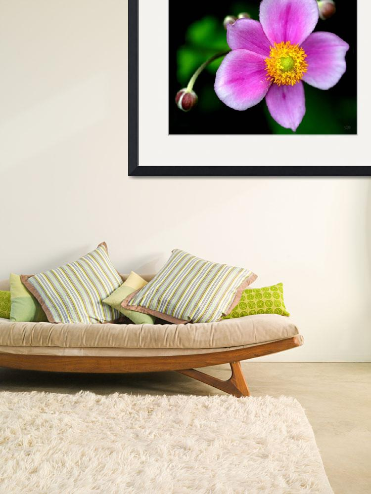 """Japanese Anenome&quot  by StudioT"