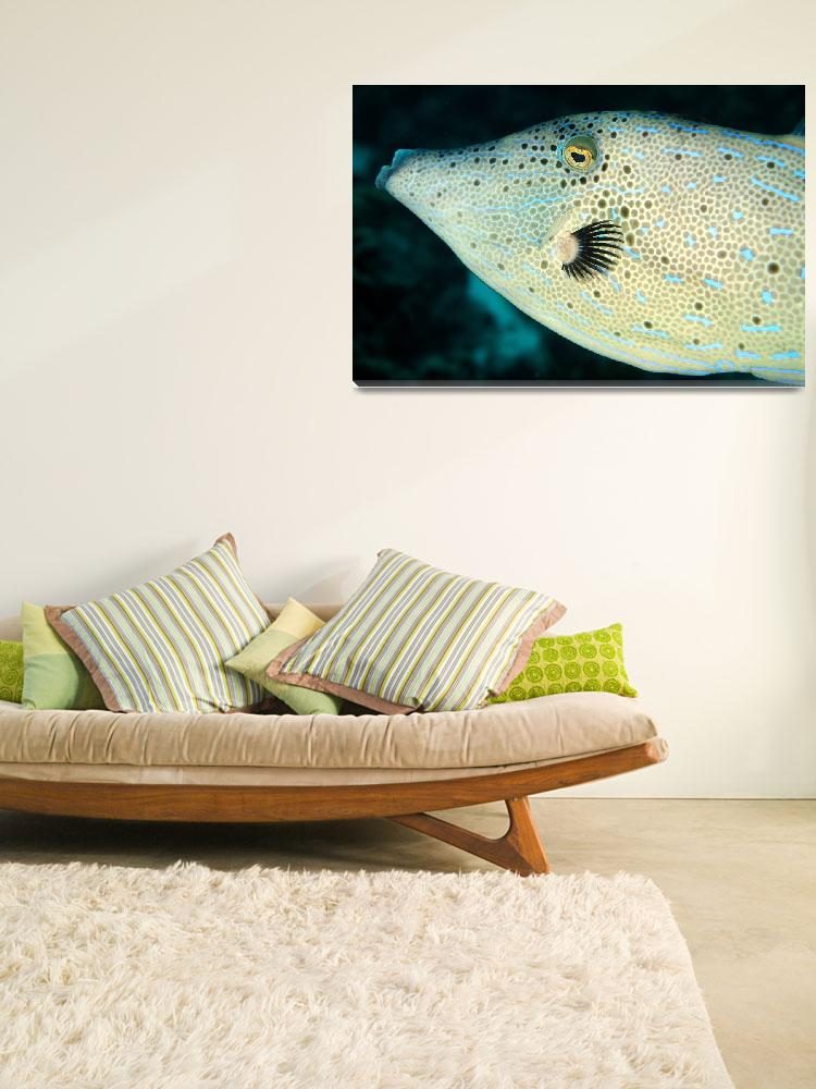 """""""Filefish Close&quot  (2004) by JoaoPonces"""