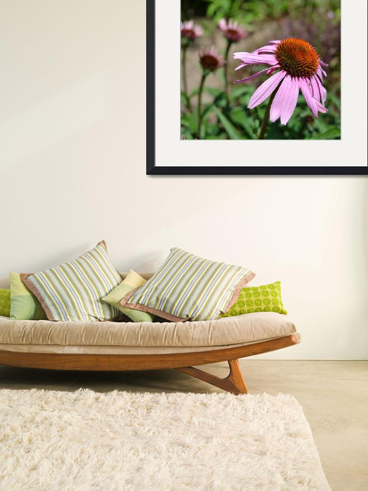 """""""Echinacea Flowers&quot  (2011) by PatriciaSanders"""