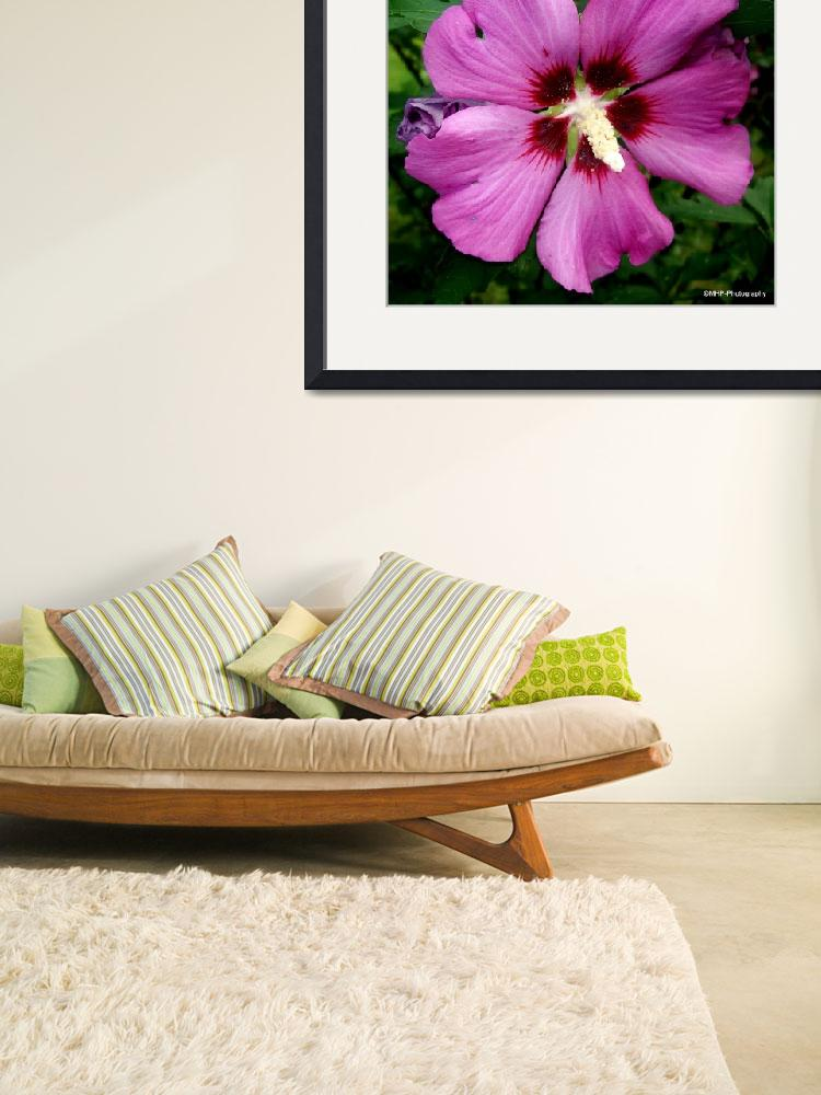 """""""Rose of Sharon Shrub""""  (2010) by MHP-Photography"""