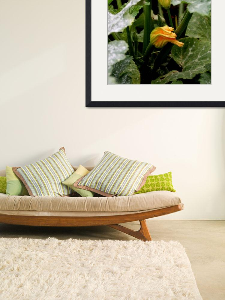 """""""Courgette flower 2&quot  by rhallam"""