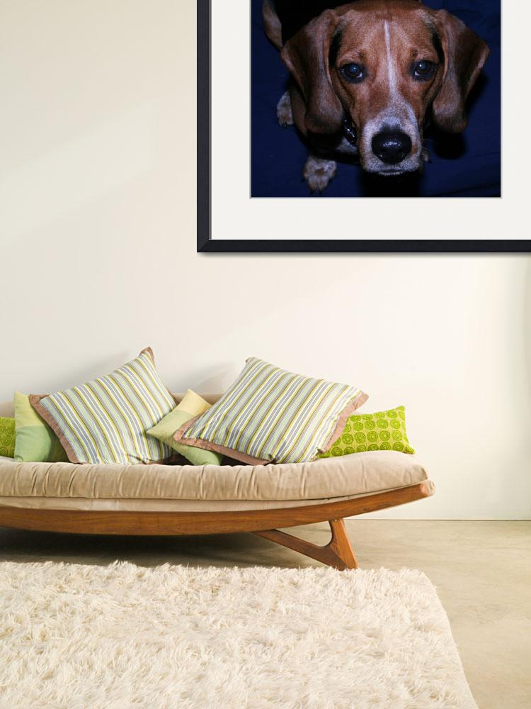 """""""Barney the Beagle&quot  (2008) by worldchampscwsox"""