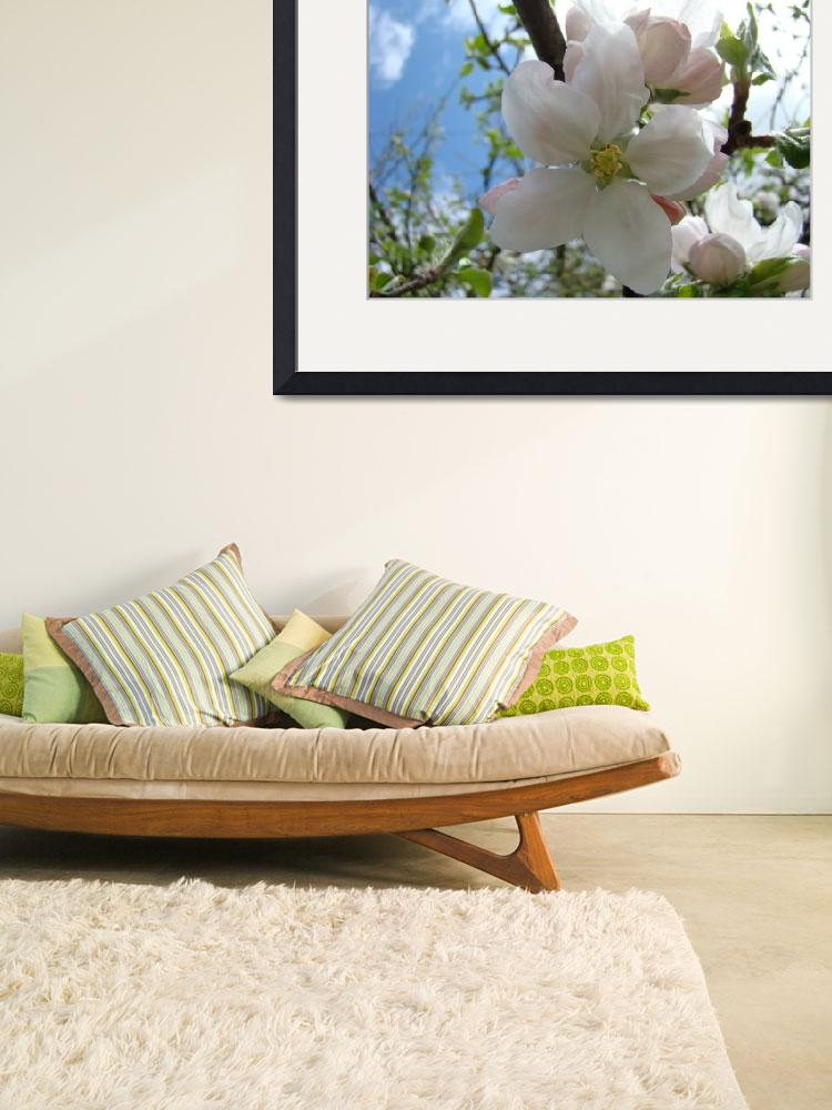 """""""Spring APPLE BLOSOSMS 50 Apple Tree Art Gifts""""  (2009) by BasleeTroutman"""