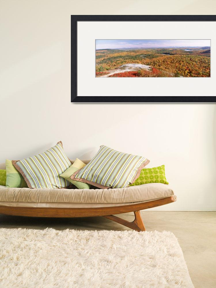 """""""""""High angle view of trees on a mountain, Bangor Ar&quot  by Panoramic_Images"""